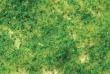 BACH32602 - Light Green Foliage