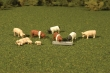 BACH33118 - HO Scale - Pigs