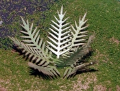 HO Scale - Laser Cut Plants - Cycad
