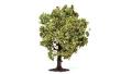 HORNR7213 - Apple Tree With Fruit - 7.5cm