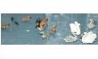 LANGF123 - OO/HO Scale - Unpainted Water Fowl