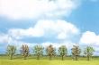 WALT949-1163 - Blossom Trees